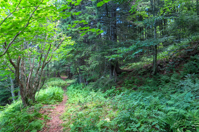 Buckeye Gap Trail -- 5,500'