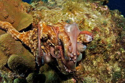 The Battle of the Octopuses
