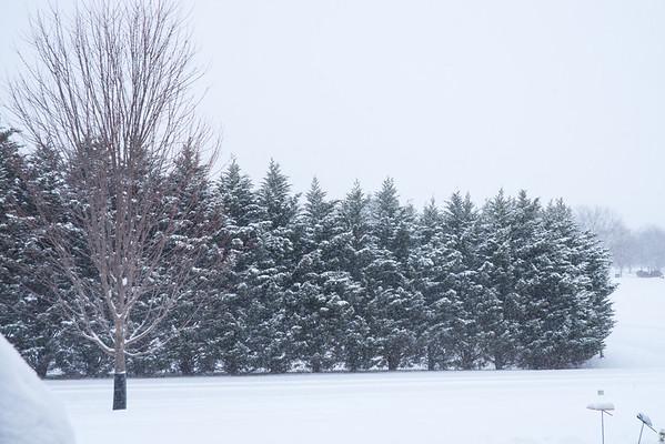 Snow 2015