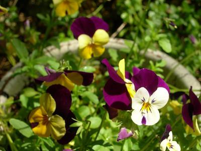 domestic flowers