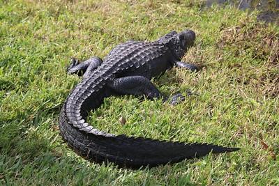 2014 South Florida