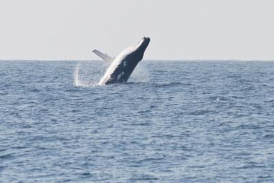 2010 September 26 Wollongong Pelagic