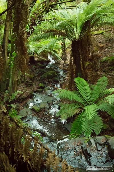 creek160313-001.jpg