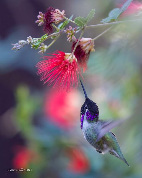 TSF_Color_Prof_Birds_Blue_2014.jpg