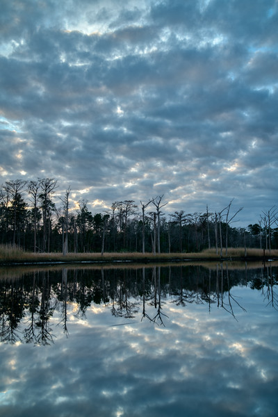 South Carolina Winter 2019-4.jpg