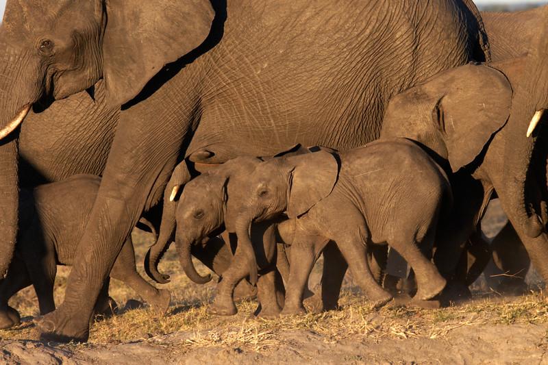 Elephants - 5261.jpg