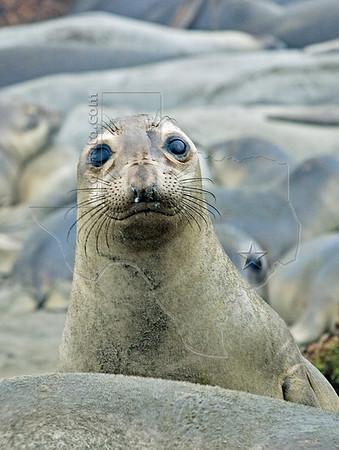 Mammals - Sea