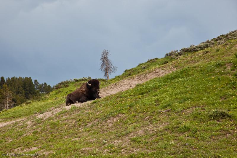 Yellowstone-78.jpg