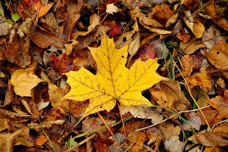 Fallen Leaf.jpg