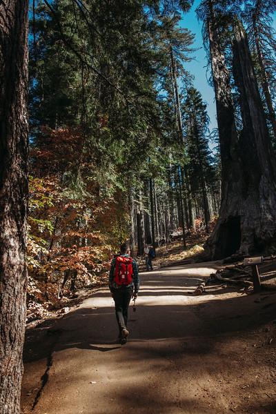 Forest_City_Photographs_Honeymoon_Califonia_San_francisco_Yosimite-200.jpg