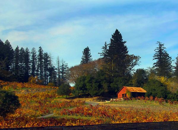 Scenic Autumn Winery Views in Sonoma