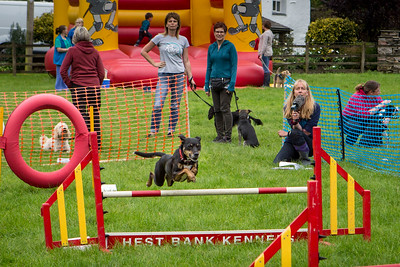 Animal Rescue Cumbria, Family Fun Day 2016