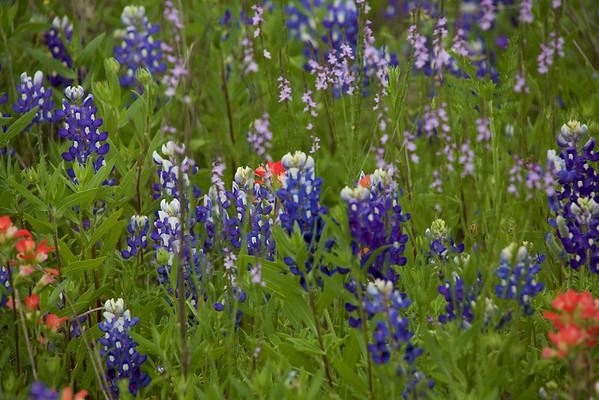 2016 - Road side wild flowers