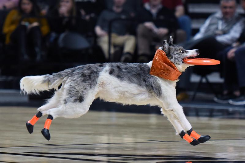 Frisbee dogs 2016-43.jpg