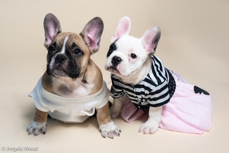 Puppies20.jpg