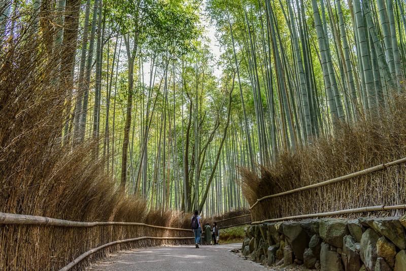 Arashiyama bamboo forest || Kyoto