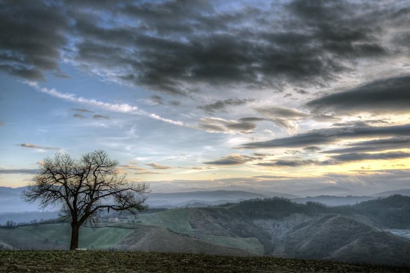 Lonely Tree - Casalgrande, Reggio Emilia - January 1, 2013