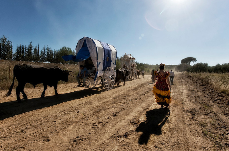 A travelling troop brave the heat of the afternoon sun and dust on there way through the Doñana national park..