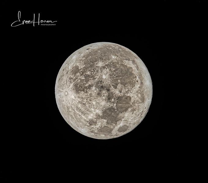 Beaver moon lg-1.jpg