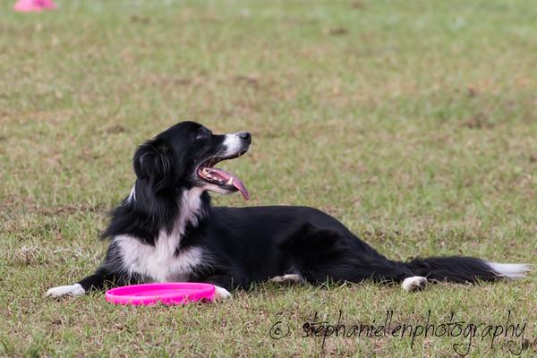 _MG_2413Up_dog_International_2016_StephaniellenPhotography.jpg
