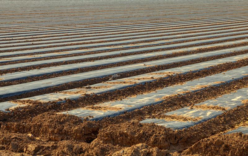Field 2, Gilroy, California, 2010