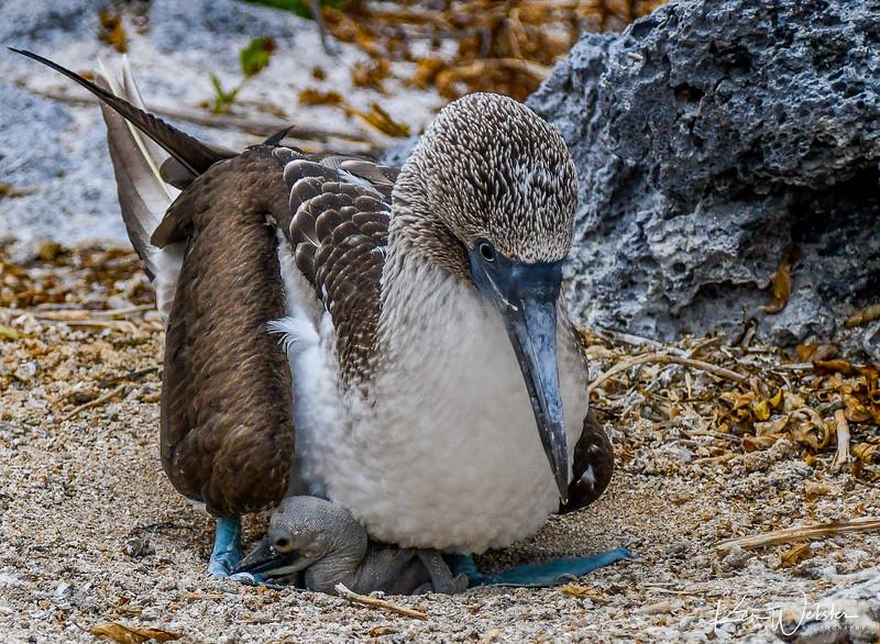2018 Lobos Island-16.jpg