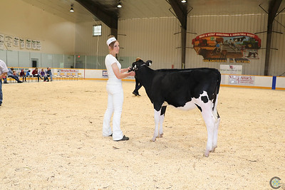 Northern AB Holstein Club Show 2017