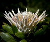 Botanical Garden, Blue Mountains, Australia 2014<br /> <br /> <br /> ©Gerald Diamond<br /> All rights reserved