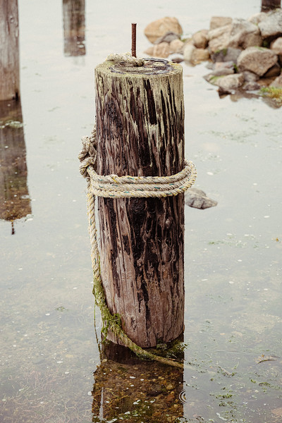 Rope tied around a piling in the sea off the shore of Lopez Island.