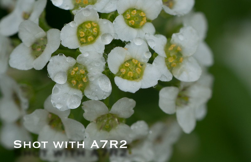 A7R2 Macro Comparison-2.jpg