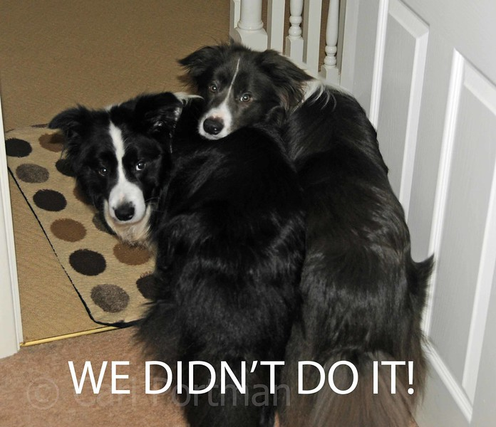 We didn't do it.jpg