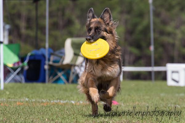 _MG_3269Up_dog_International_2016_StephaniellenPhotography.jpg