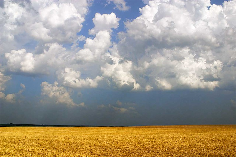 June Wheat, Ellsworth County