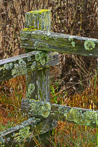 Old Fence at Pt. Reyes