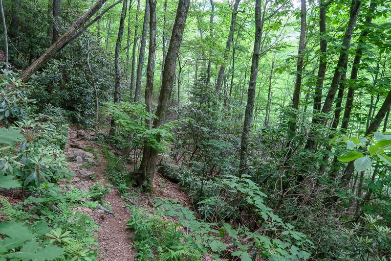 Greasy Cove Trail -- 4,500'