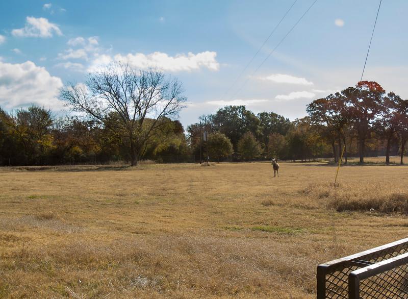 Ranch112814_1.JPG