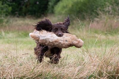 Livsey Dogs