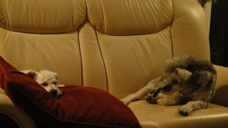 [20110619] Simpson & Duke (1).JPG