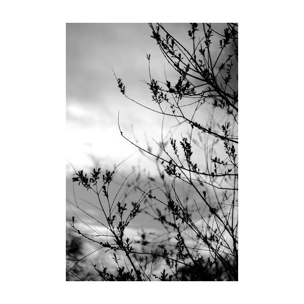 104_Branches_10x10.jpg