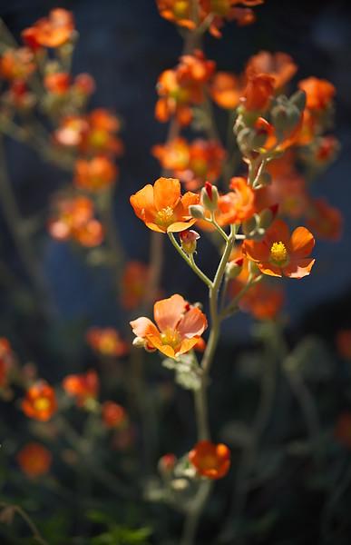 Orange Crush_1.jpg
