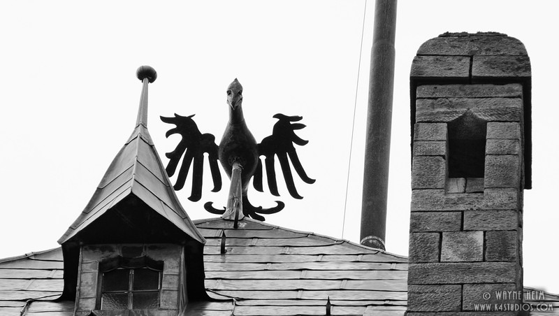 Bird on Roof    Black and White Photography by Wayne Heim