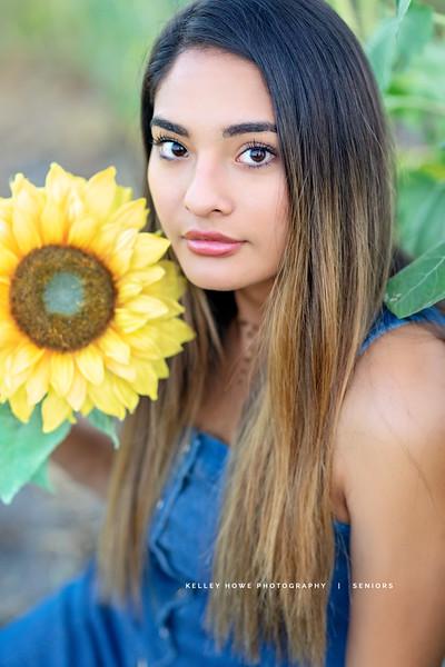 Sunflower 0805.jpg