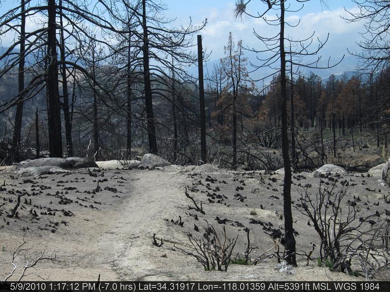 20100509127-Trail Recon, Silver Moccasin-East of Chilao.JPG