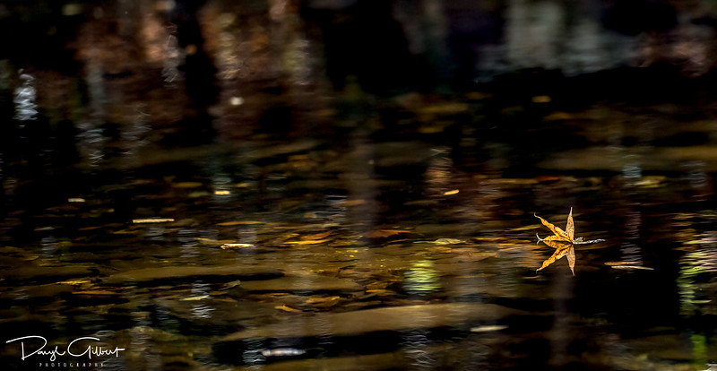 Fall Leaves Floating Down a Mountain Stream
