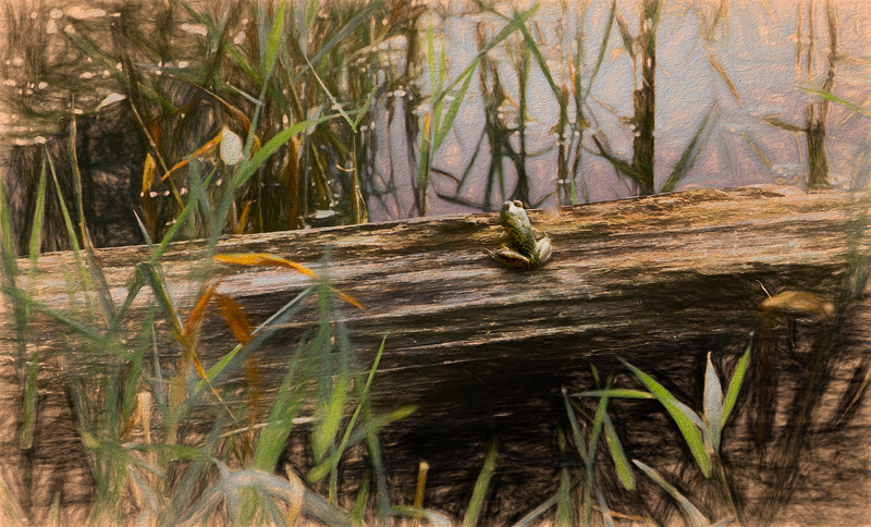 CarlSimmerman-Frog On A Log.jpg