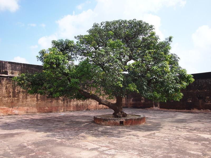 PA083241-courtyard-tree.JPG