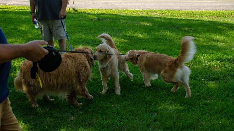 PuppyParty18-525.jpg