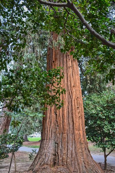 Capitol Park Arboretum, Sacramento CA