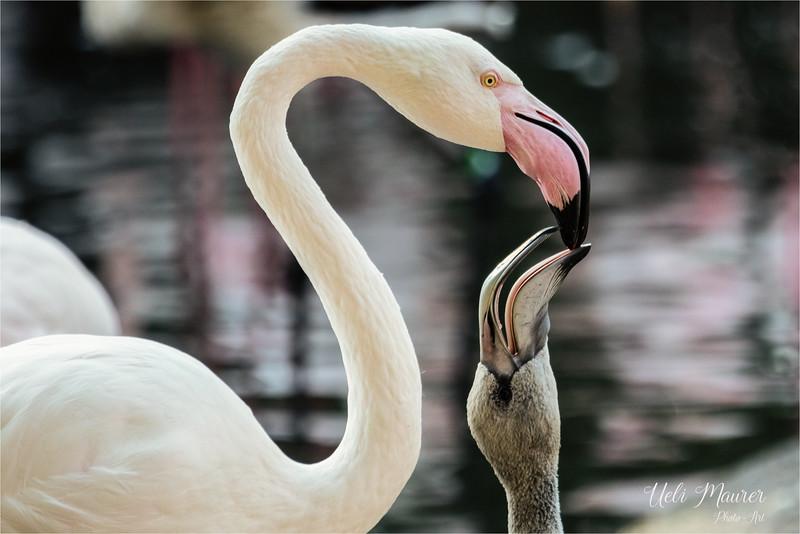 2016-10-05 Zoo Basel0U5A0344-Bearbeitet.jpg
