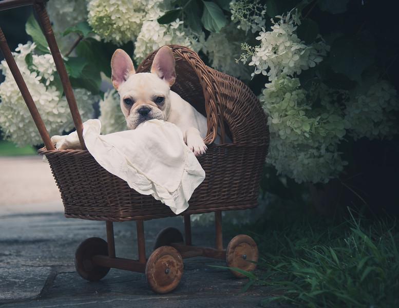Finn baby carriage ajs-11.jpg